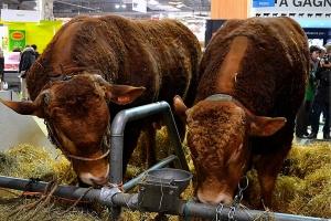 Salon de l'Agriculture 2021 annulé :  La déception de la filière bovine limousine.