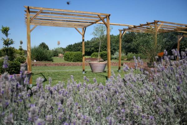 Cassinomagus : Un jardin pour découvrir les plantes cultivées par les gallo-romains.