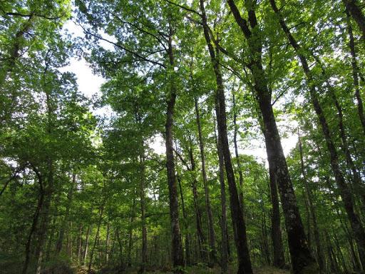 La forêt de Rochechouart : un site reconnu pour sa biodiversité et son histoire