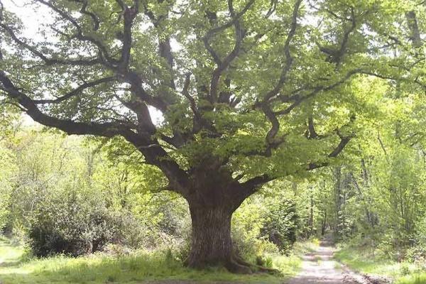 Histoire et biodiversité : La forêt de Rochechouart a traversé les temps