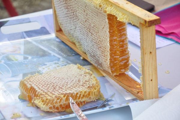 Le Rucher d'Artemis, à la découverte du monde des abeilles – Lanouaille